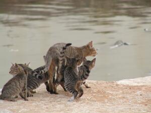 Cats on south bank of the Yarkon River